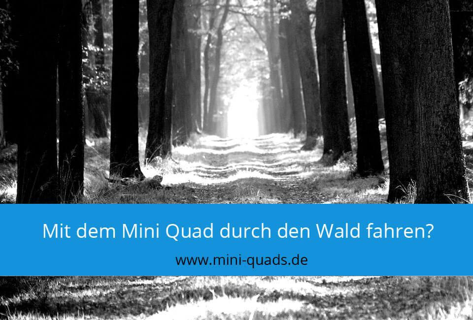 Mit dem Mini Quad durch den Wald fahren